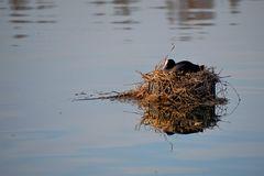 das schwimmende Nest