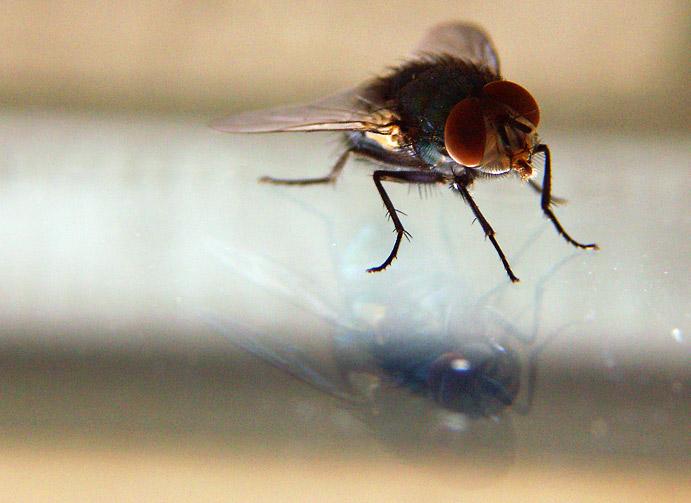 Das Selbstwertgefühl einer Fliege