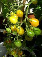Das sind Tomaten