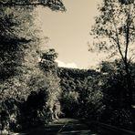 Das Sonnenspiel zwischen den Bäumen