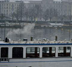 Das SPA Schiff mit Dampfsauna fand Punkermöve Jonathan nicht so dolle