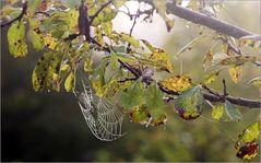 das Spinnennetz....