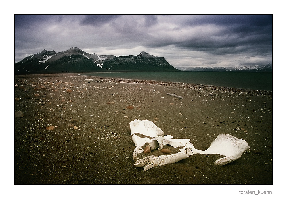 """Das Spitzbergen-Projekt [Nr.4] """"Jäger und Gejagte"""""""