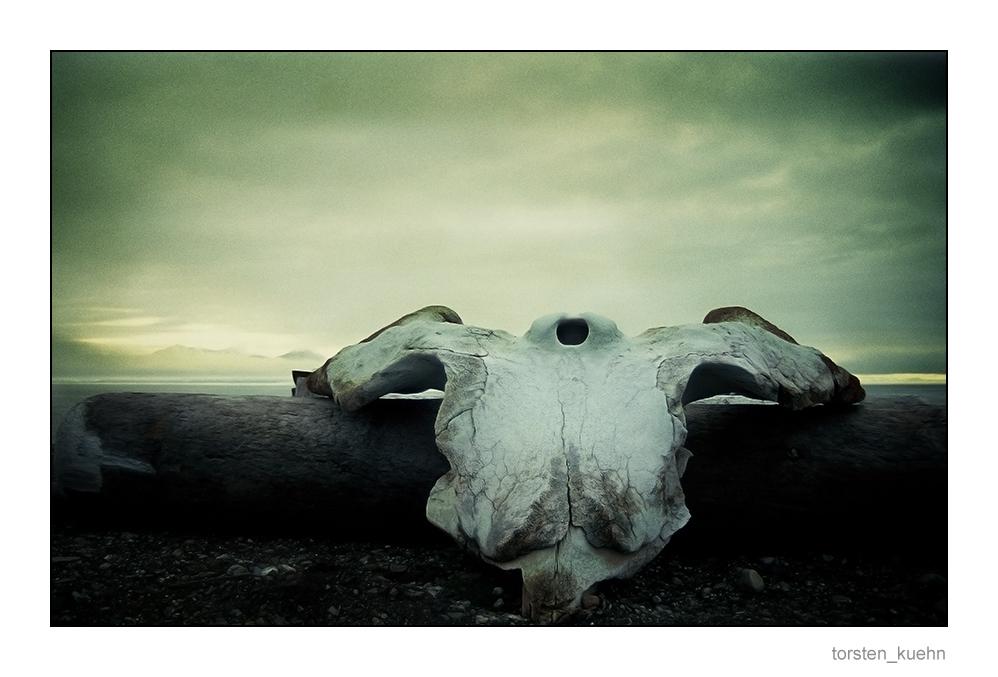 "Das Spitzbergen-Projekt [Nr.8] ""End of Life"""