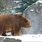 Das Tal der Bären [7] ...