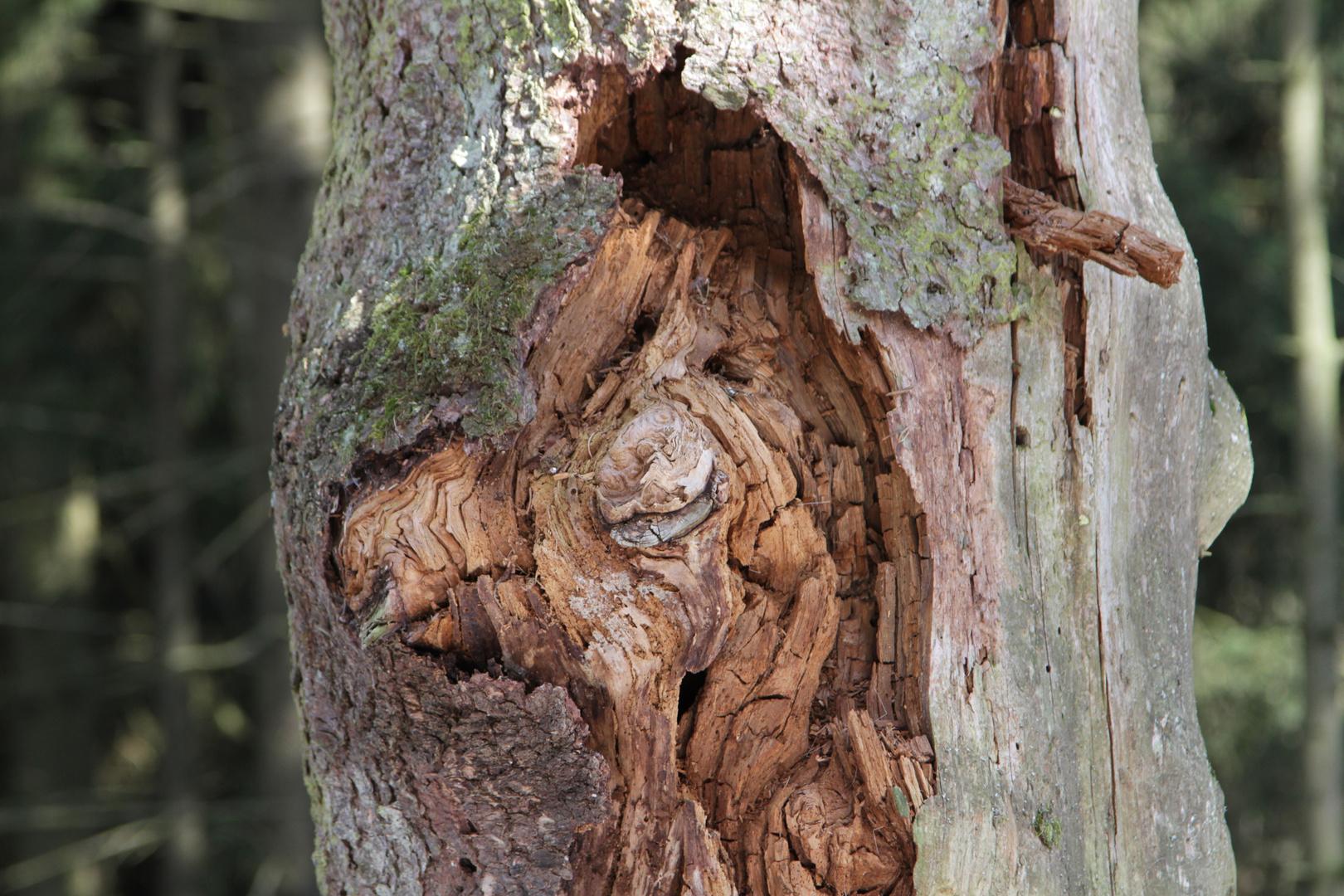 das Tier im Baum