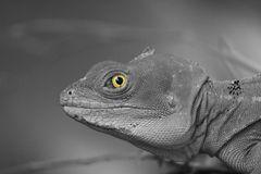 Das Tier mit den Augen