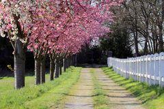 ~ Das Tor zum Frühlingsglück ~