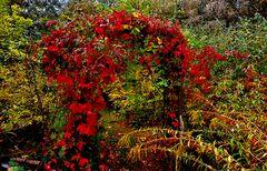 Das Tor zum Herbst steht weit auf, ....