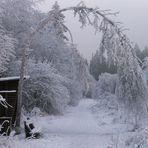 Das Tor zum Märchenwald ..
