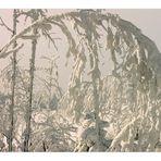 Das Tor zum Winter-Paradies... - (oder: Formen und Strukturen aus Schnee...)