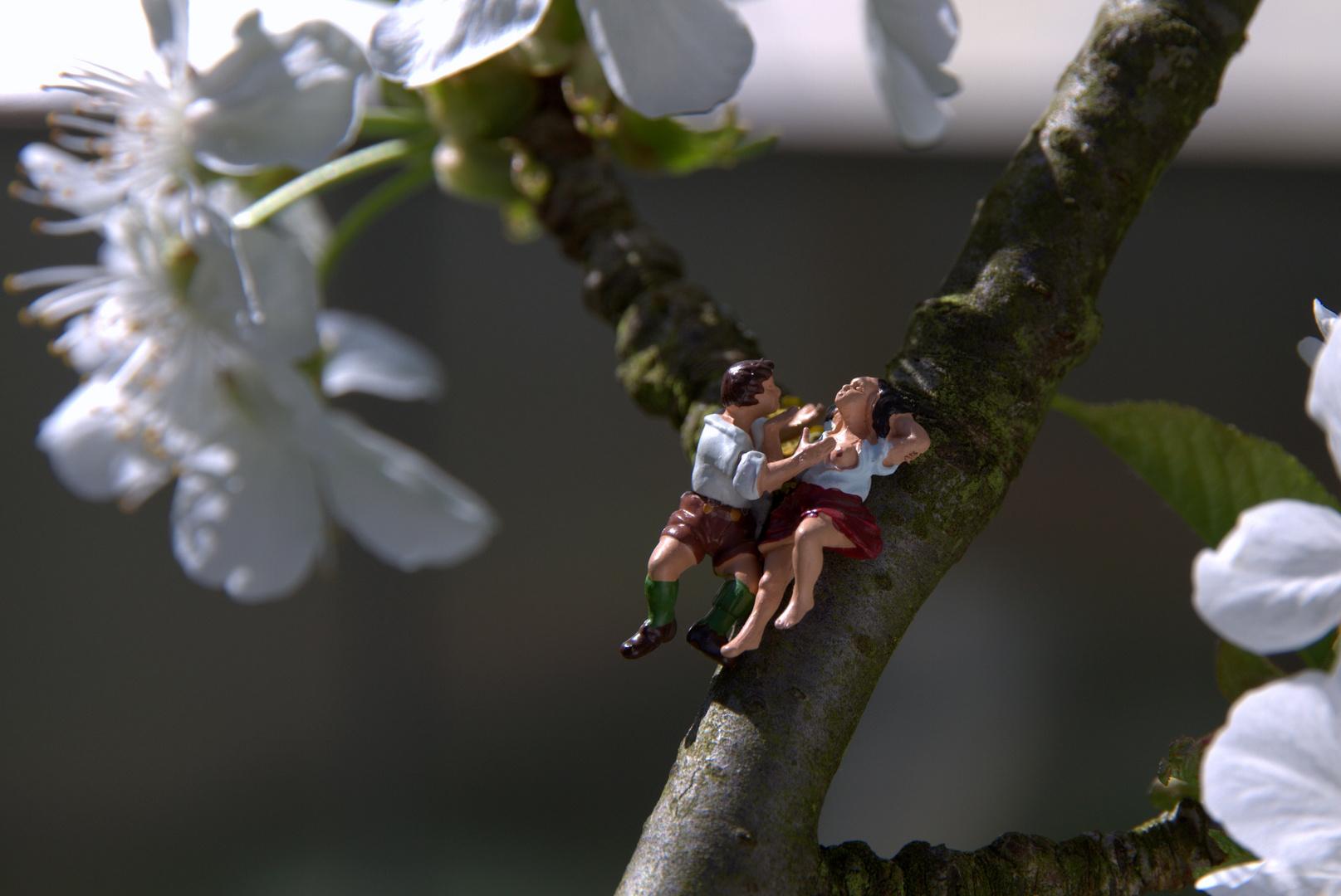 Das treiben zur Kirschblüte