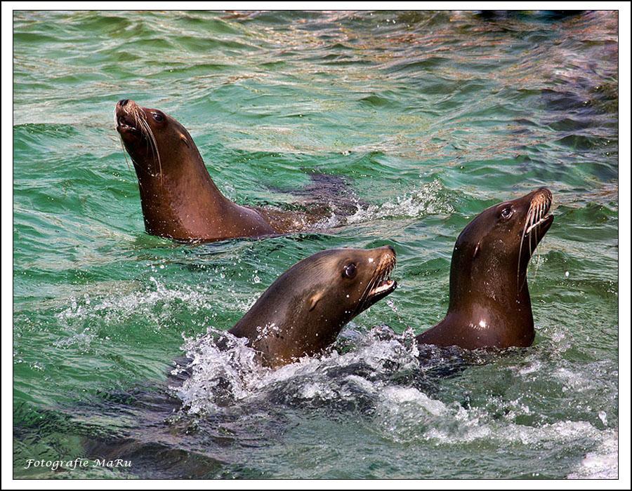 Das TRIO aus dem Schwimmbad ;-)