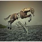 Das ultimative Springpferd