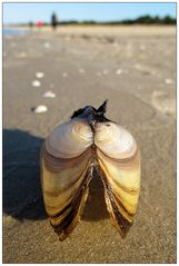 Das unbekannte Wesen aus der Ostsee