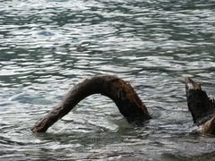 Das Ungeheuer von Loch Ness im Achensee ???