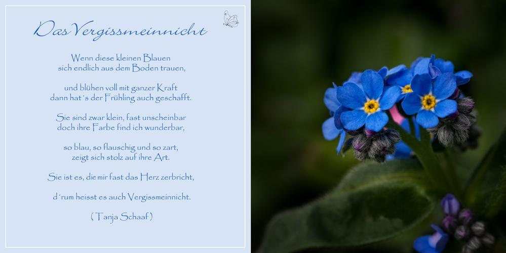 Das Vergissmeinnicht Foto Bild Karten Und Kalender