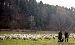 das verlorene Schaf ist auch wieder da
