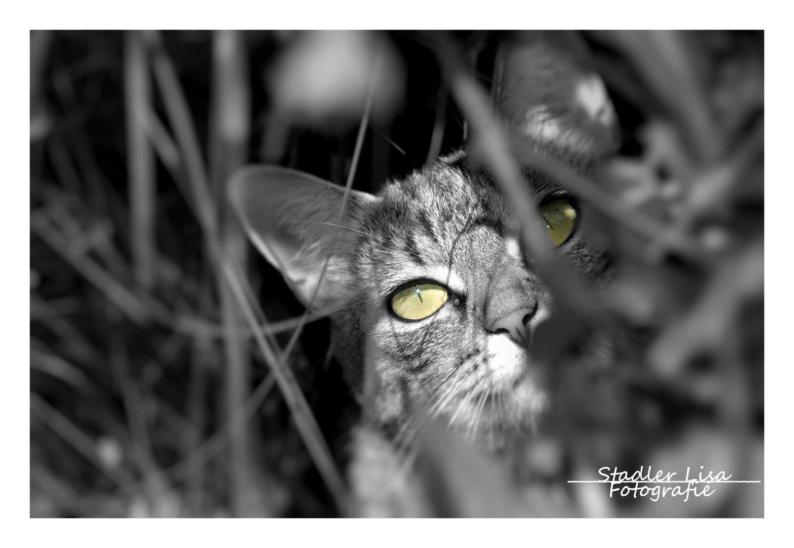 Das Versteck im Busch
