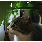 Das Versteck unterm Blumentopf