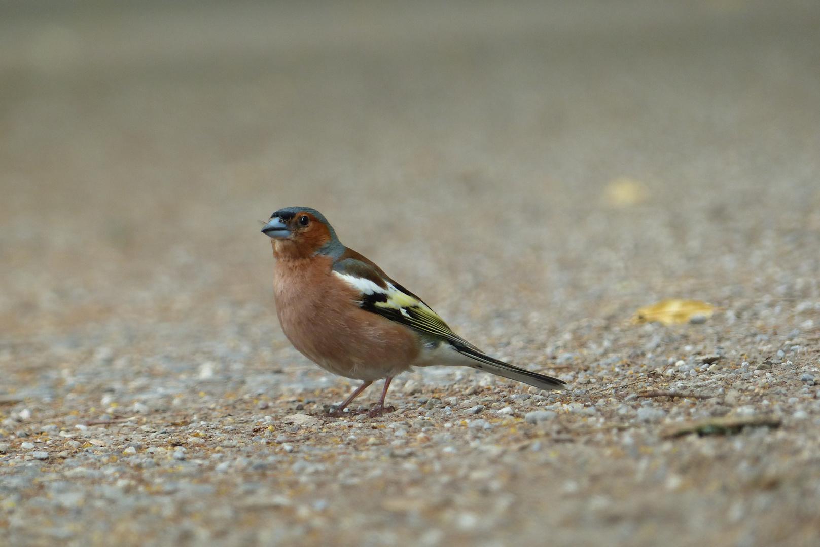 Das Vögelchen