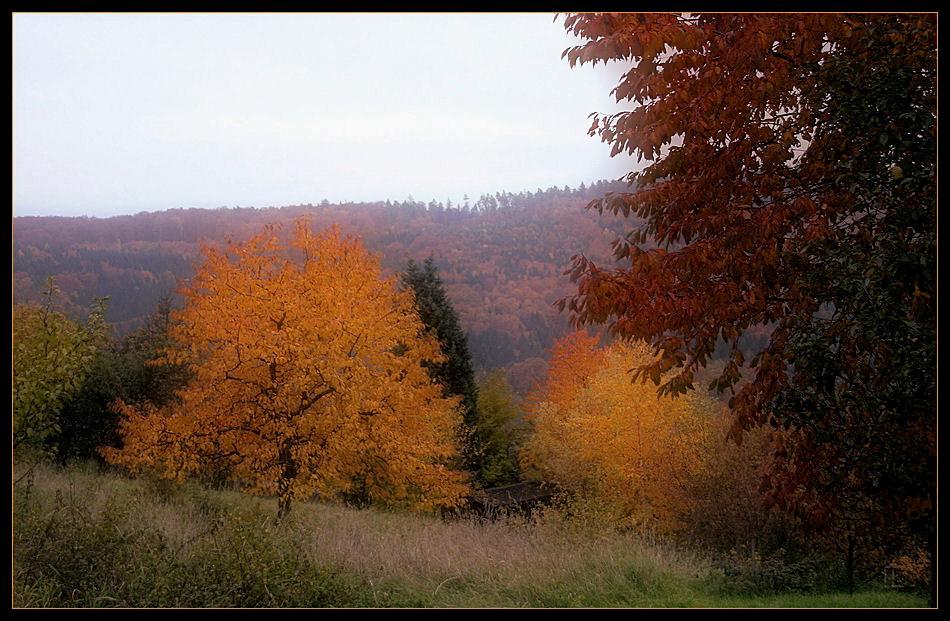 Das vorerst letzte Herbstbild ...