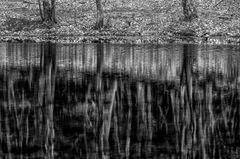 Das Waldufer