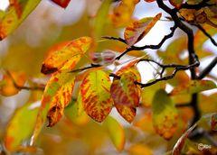 das war Herbst