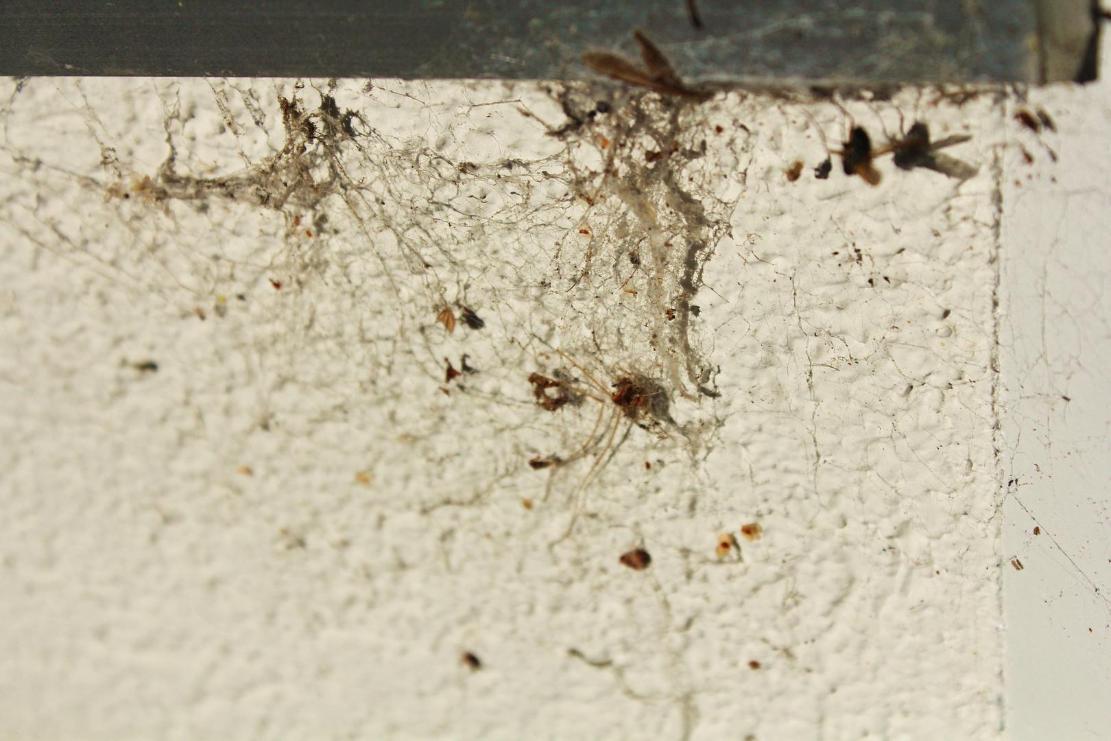 Das war mal ein Spinnennetz