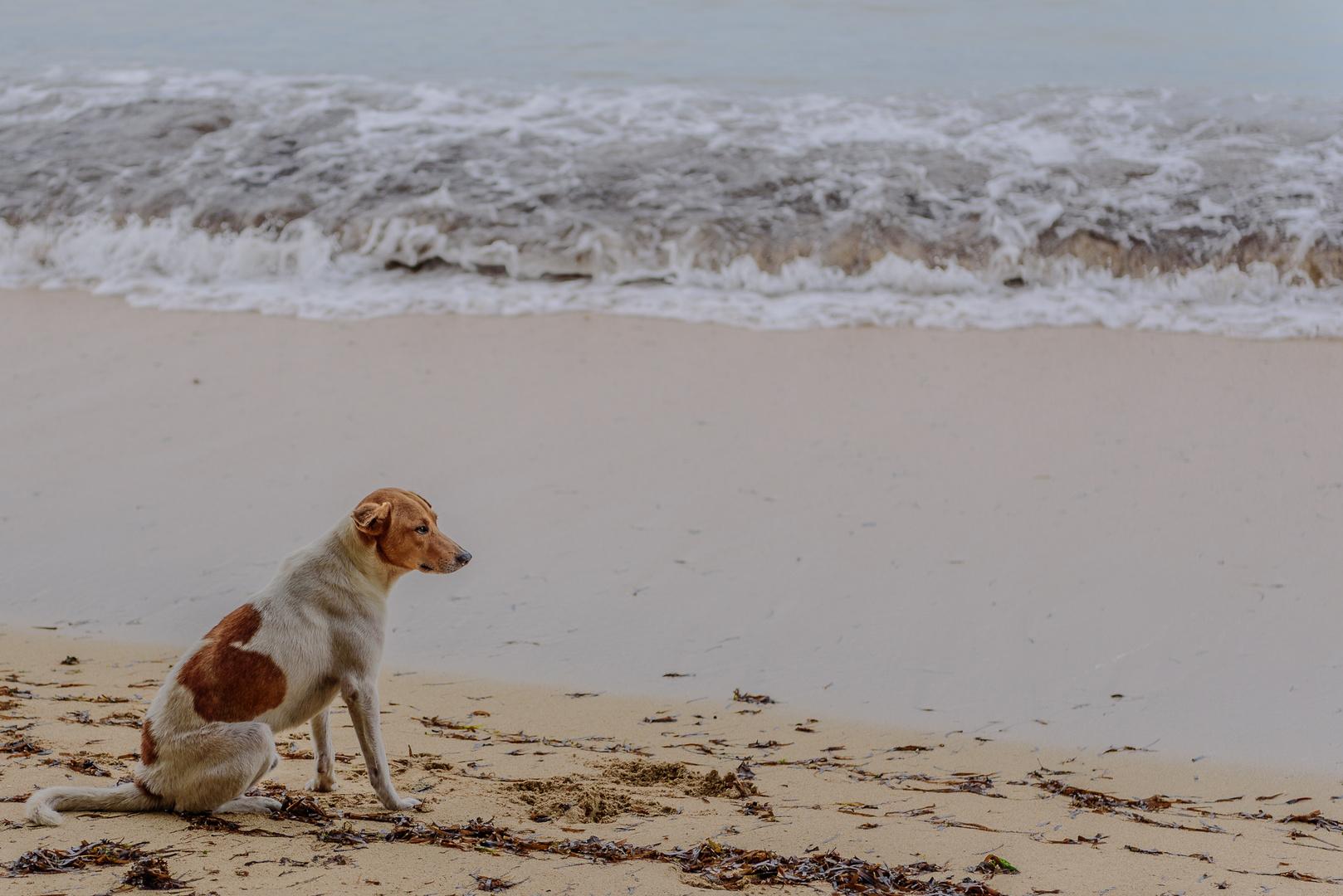 Warten Auf Das Meer