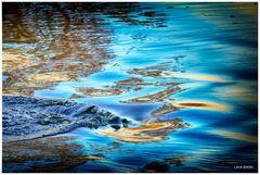 Das Wasser in seinem Element ...