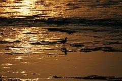 Das Watt im goldenen Glanz