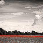 Das Weizenfeld
