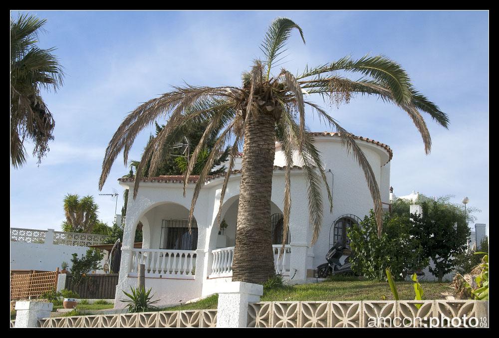 Das Werk des Palmrüsslers