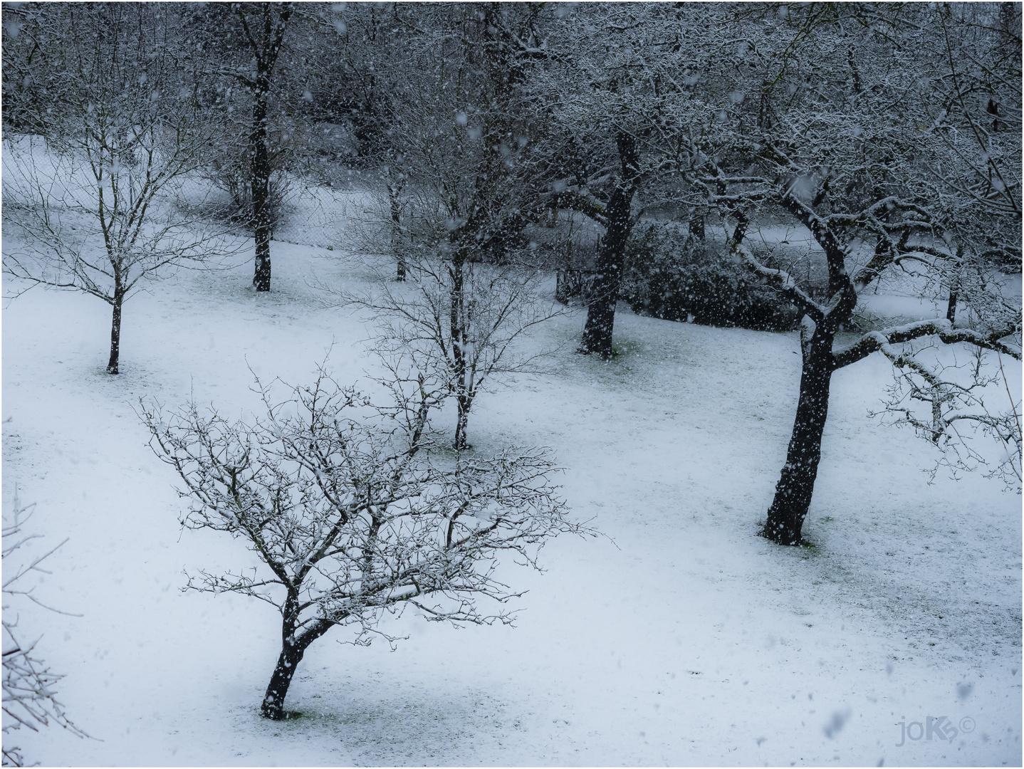 Das Wetter Heute Foto Bild Wetter Natur Bäume Bilder Auf