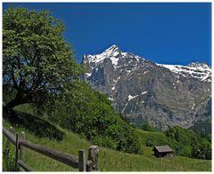 Das Wetterhorn bei Grindelwald