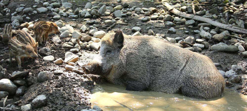 Das Wochenend-Natur-Bad