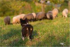 Das Wochenende, ich seh es hinten den Schafen kommen