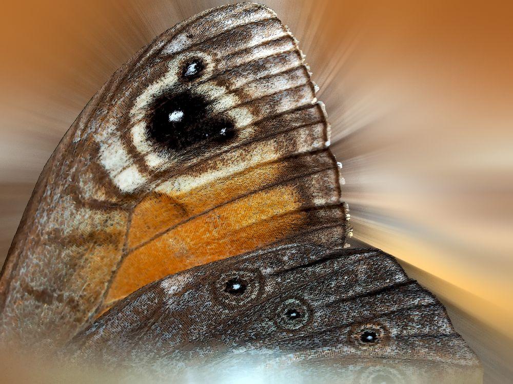 Das Wunder eines Schmetterlingsflügels! - Le miracle d'une aile de papillon...