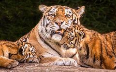 Dasha mit ihren Kleinen