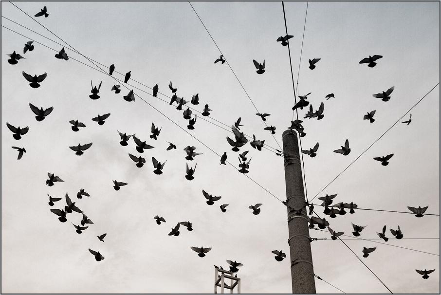 `´ davon fliegen `´