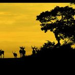 Dawn Over Africa