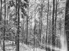 Daylab Schwarzwald