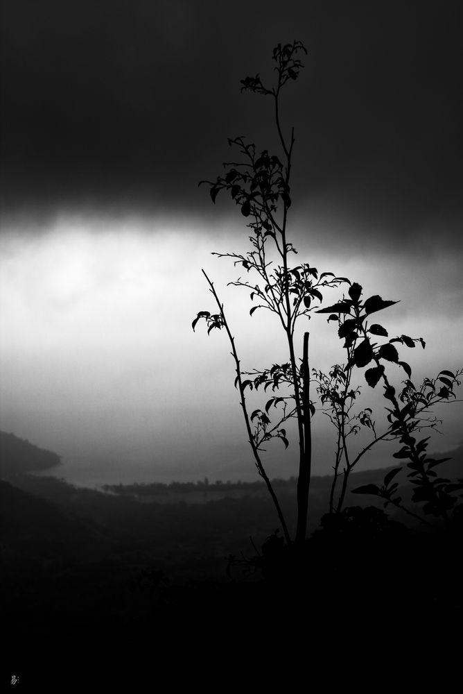 daylight.darkness