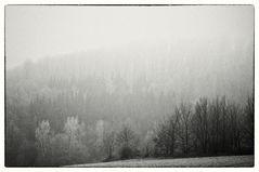 Days of Grey #1