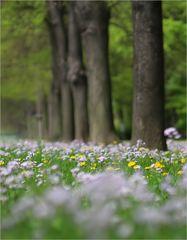 DD-Frühling