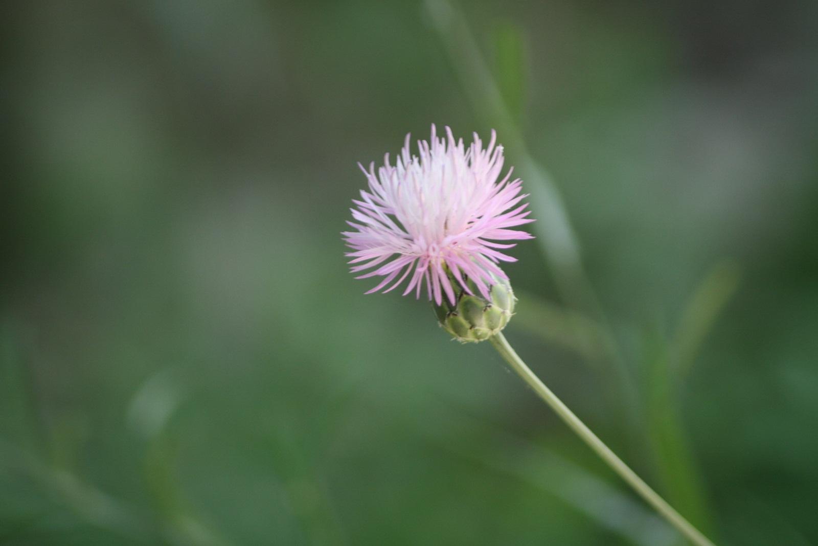 De color lila