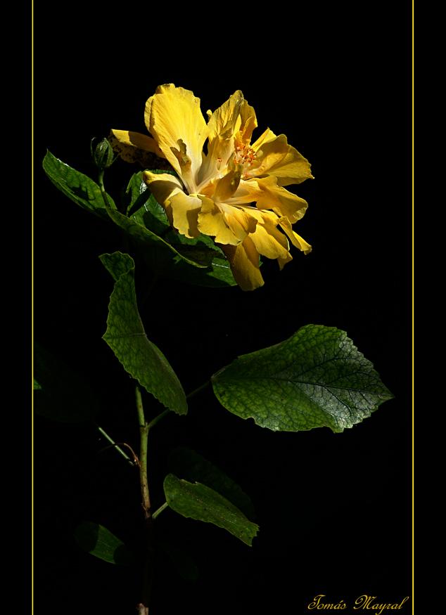 De Flor a Flor..Para MªTeresa PASCUAL
