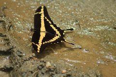 De la serie como pequeñas hadas en el bosque, o solo mariposas 1