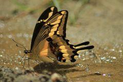 De la serie como pequeñas hadas en el bosque, o solo mariposas 3